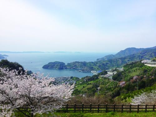 野福峠の桜