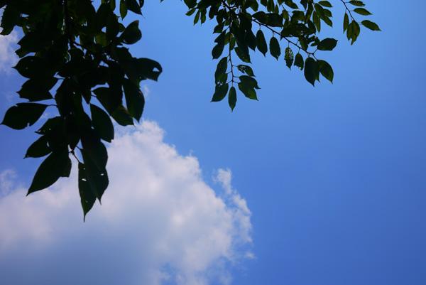 今日も青空