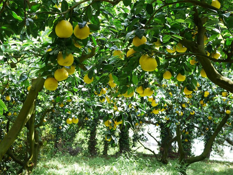 ジューシーフルーツの森