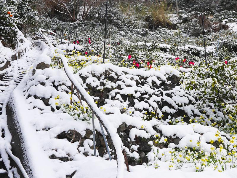 雪のなかの色