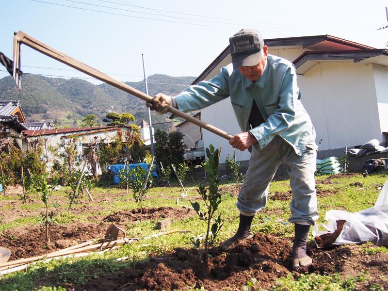 苗木の植え付け