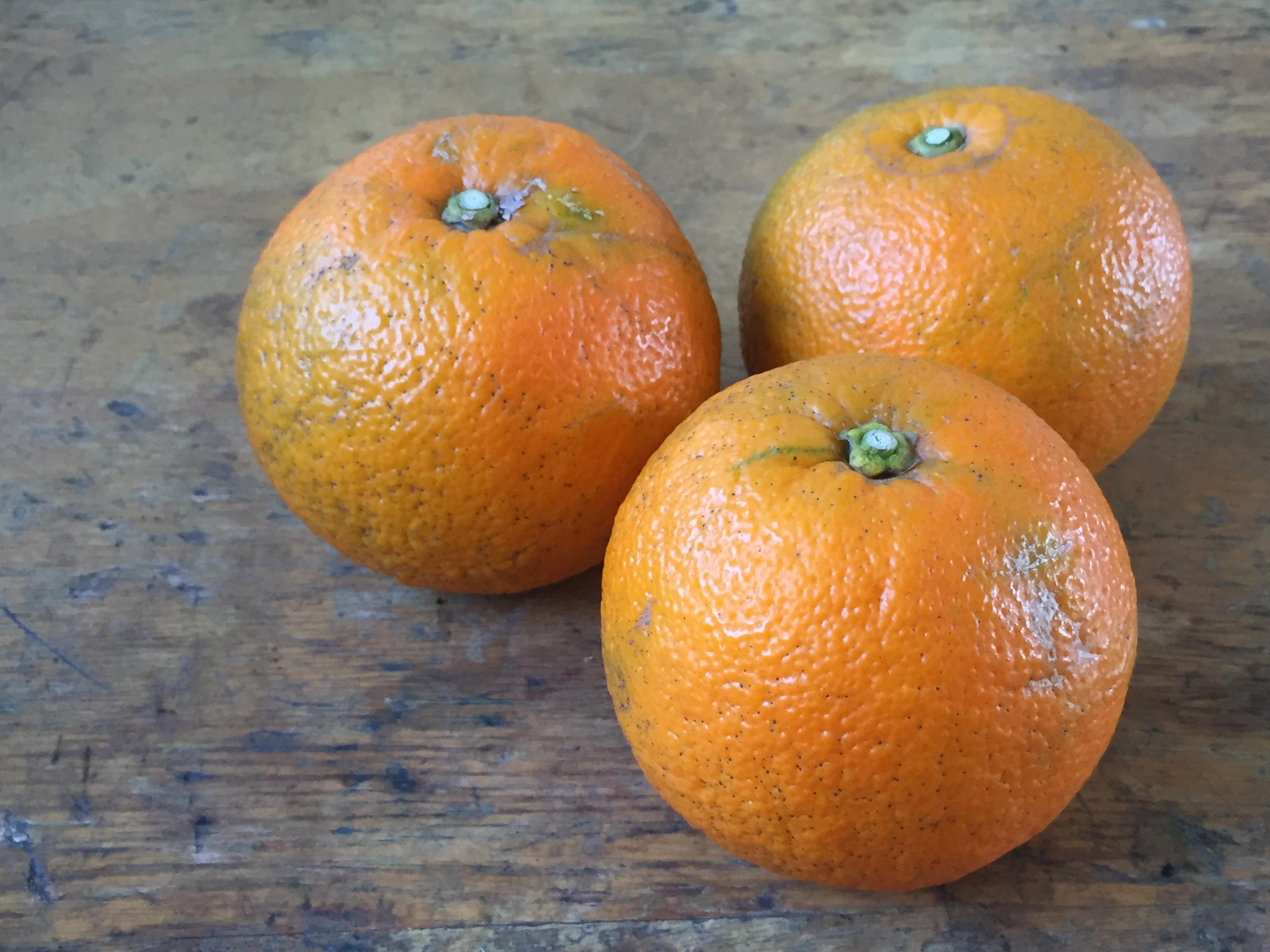 マーマレードの起源を辿る、かぶす(ダイダイ)のオレンジマーマレード