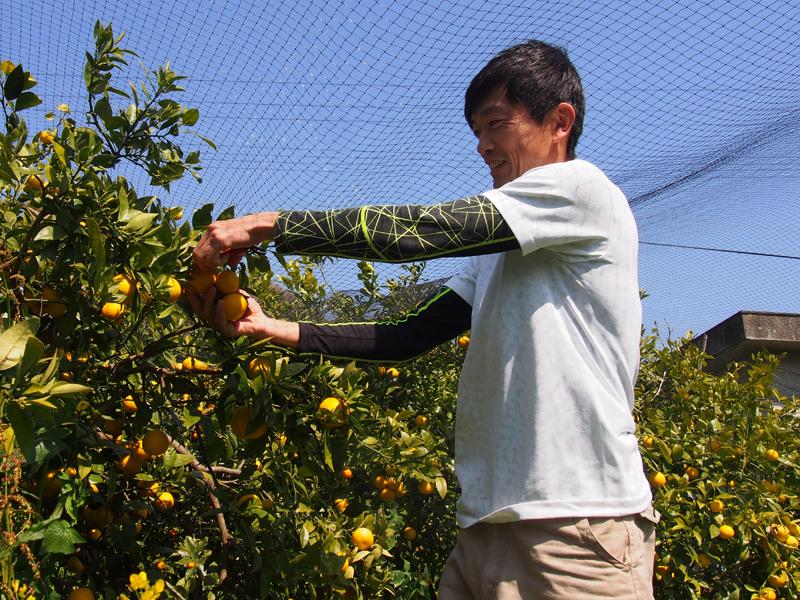 防鳥ネットの下で収穫作業